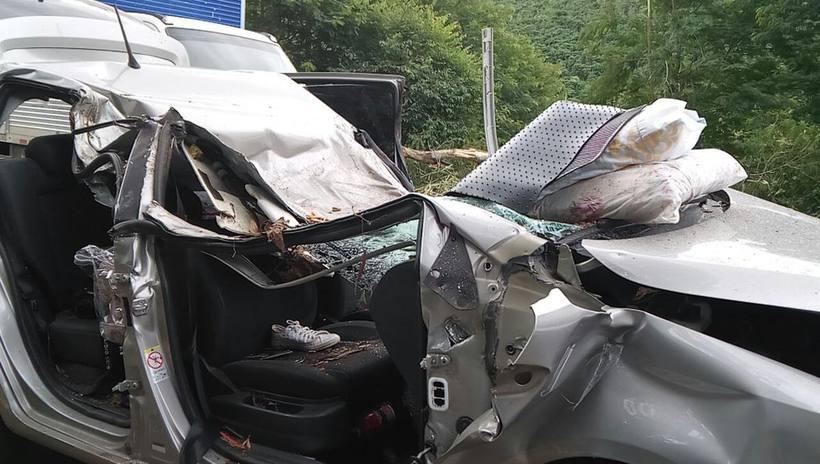 Árvore cai sobre carro e mata músico de BH e filha na BR-262