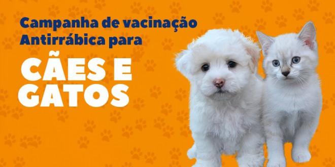 Sábado é Dia D de vacinação antirrábica