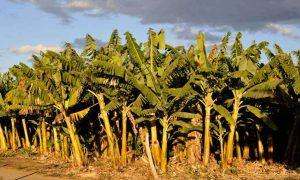 Minas aumenta diversificação da produção agrícola