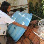 Dengue: boletim lista 10 mortes investigadas em Minas; uma delas em BH